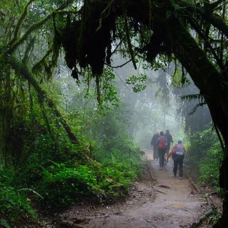キリマンジャロは、ジャングルからスタート