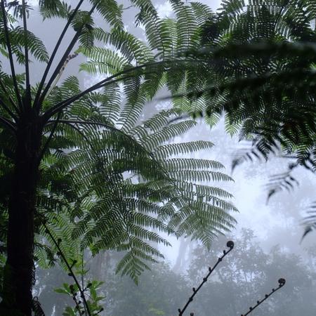 鬱蒼としたジャングル